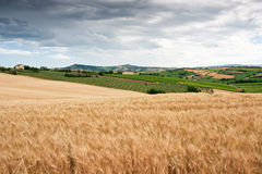Heuvelig platteland van le Marche, Italië Stock Foto
