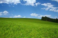 Heuvelig weidenlandschap met bos en mooie bewolkte hemel Royalty-vrije Stock Foto's