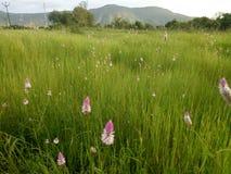 Heuvelige die gebieden door gras en bloemen worden behandeld royalty-vrije stock afbeeldingen