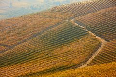 Heuvels in de herfst, wijngaarden met gele en bruine bladeren Stock Foto