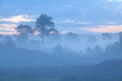 Heuvels en bomen in mistige schemer Royalty-vrije Stock Afbeeldingen