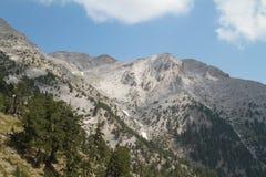 Heuvels en pijnbomen in Olympus-berg, Griekenland Stock Foto's
