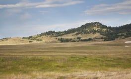 Heuvels en pijnboombomen in de Zwarte Heuvels van Zuid-Dakota royalty-vrije stock foto