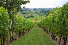 Heuvels en wijngaarden in Piemonte (Italië) Royalty-vrije Stock Foto's