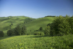 Heuvels met gras en bomen Royalty-vrije Stock Fotografie