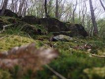 Heuvels met mos Royalty-vrije Stock Afbeeldingen