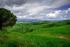 Heuvels met wijnstokken worden gezaaid die Italiaans Platteland royalty-vrije stock foto