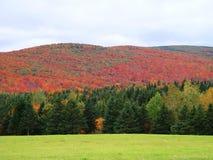 Heuvels van kleur door heldergroene voorgrond, Quebec Canada worden gecompenseerd dat royalty-vrije stock afbeeldingen