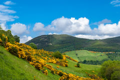 Heuvels van Schotland Royalty-vrije Stock Foto