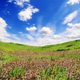 Heuvels van violette bloemen op een bewolkte hemel als achtergrond Stock Afbeelding