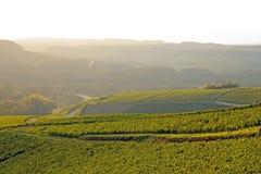 Heuvels van wijnstokken, Chablis-wijn, dichtbij Auxerre Bourgondië, Frankrijk royalty-vrije stock afbeeldingen