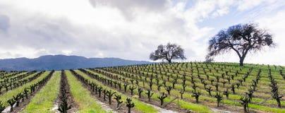 Heuvels in wijngaarden in Sonoma-Vallei aan het begin van de lente, Californië worden behandeld dat royalty-vrije stock afbeeldingen