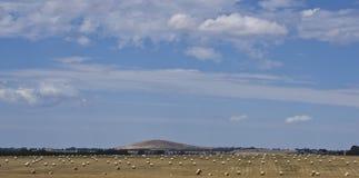Heuwiese unter Hügel nahe Dubbo, New South Wales, Australien Lizenzfreie Stockbilder