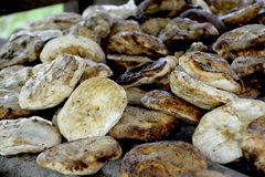 Hevea brasiliensis guma Zdjęcia Stock