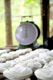 Hevea brasiliensis guma Zdjęcie Royalty Free