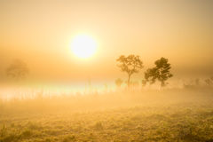 The heven gloden fog Royalty Free Stock Photo