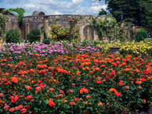 HEVER, KENT/UK - JUNE 28 : Roses Growing in the Garden at Hever Stock Photos