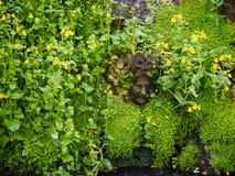 HEVER, KENT/UK - JUNE 28 : Stone Head Peeking through Flowers  i Stock Images