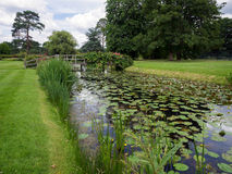 HEVER, KENT/UK - JUNE 28 : Water Lilies at Hever Castle in Hever Royalty Free Stock Photography