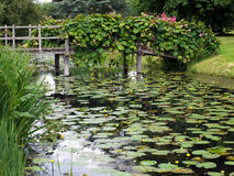 HEVER, KENT/UK - JUNE 28 : Water Lilies at Hever Castle in Hever Royalty Free Stock Photo