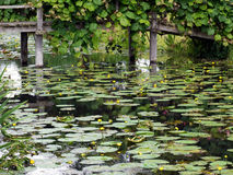 HEVER, KENT/UK - JUNE 28 : Water Lilies at Hever Castle in Hever Royalty Free Stock Images