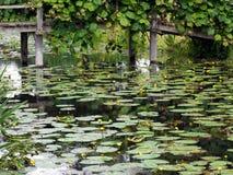 HEVER, KENT/UK - 28 JUNI: Waterlelies bij Hever-Kasteel in Hever Royalty-vrije Stock Afbeeldingen