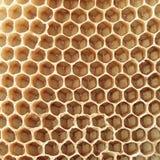 Hexágonos da colmeia Foto de Stock