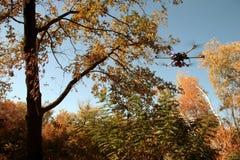 Hexacopter在秋天森林里 免版税图库摄影