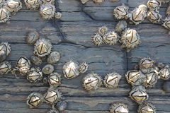 Hexacorallia sea anemones, marine life, animals living in the ocean, background Royalty Free Stock Images
