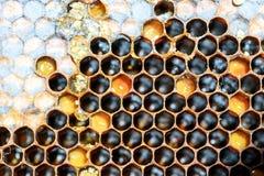 Hexagon κυψελωτά σχέδιο και μέλι κυψελών μελισσών στοκ φωτογραφία