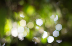 Hexagon bokeh,blur focus of leaf. Royalty Free Stock Photos