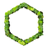 Hexagon made from green leaves isolated on white background. 3D render. Stock Photography