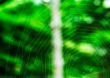 Hexagonal Spider Web. Spiderweb trap spread on a tree, waiting for a prey, forming almost perfect hexagonal patterns royalty free stock photography