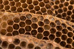 Honey comb with honey bee & x28;Apis mellifera& x29; nest. Hexagonal structure within bee hive of European bee in the family Apidae stock image