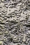 Hexagonal volcanic prism wall detail. On the Vrkoc rock stock images