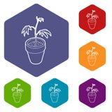 Hexahedron del vector de los iconos de la planta del cáñamo ilustración del vector