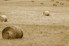Hey Bales Royalty Free Stock Photography
