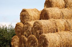Hey Bales Stock Photo