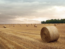 Hey bales. In a farm field with dark sky Royalty Free Stock Photo