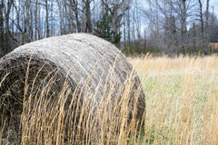 Hey Hay! Stock Photography
