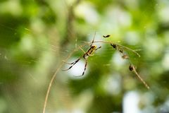 Hey! How`s it going? Spider? royalty free stock photos