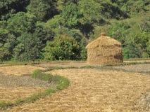 Hey immagazzini su un giacimento del riso, Nepal Fotografie Stock Libere da Diritti