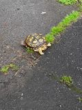 Hey slow down Mr. Turtle. Slow down mr hey turtle stock image