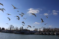 Hey thoes seagull fight for wind anf fight for food stock photos