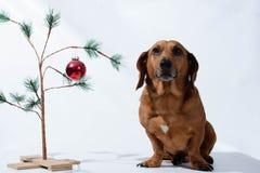 Hey você pouco Natal Weiner Fotos de Stock Royalty Free