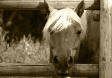 Hey, what's up. Horse looking through the fence stock images