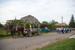 HEYIVCI UKRAINA - SEPTEMBER 09, 2016: Skörddagberöm in Royaltyfri Fotografi