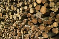 Hög av cutted stammar i skogen Arkivbild