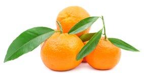 Hög av mandariner med bladet som isoleras på vit Royaltyfria Bilder