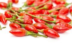 Hög av mogna röda peppar Piri-Piri Arkivfoton